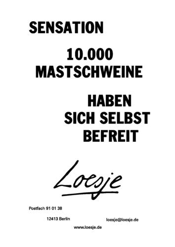 SENSATION / 10.000 MASTSCHWEINE HABEN SICH SELBST BEFREIT
